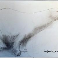 ANIMALES EN CARBONCILLO - ALEJANDRA Y PABLO, 7 Y 8 AÑOS