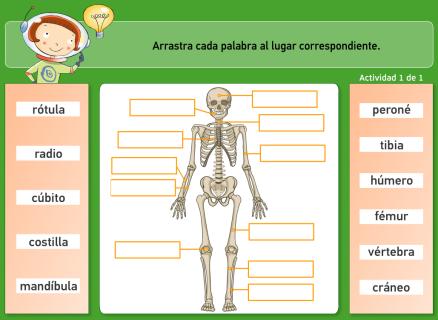 ejercicios-online-interactivos-huesos-esqueleto-humano-primaria