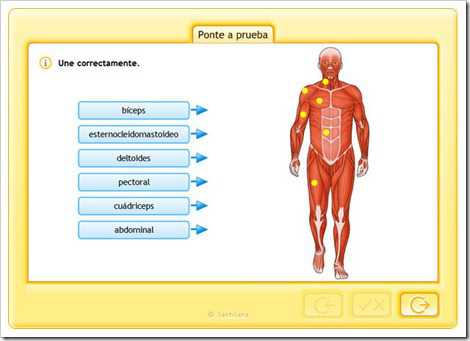 ejercicios-online-interactivos-musculos-cuerpo-humano-primaria