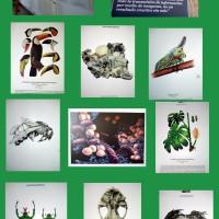 Exposición ILUSTRACIENCIA en el Caserio del Henares - Planes  con niños